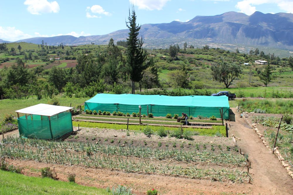 Irrigation Peru For Website